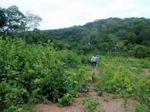 Extracción aluvial tierras negras